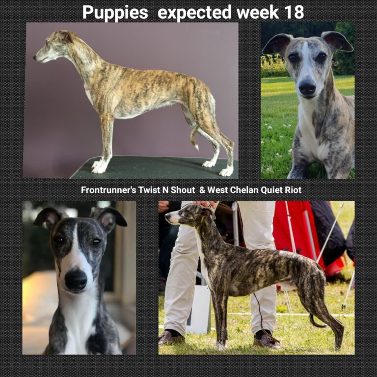 Puppies expected week 18